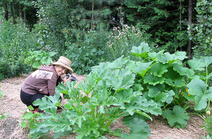 Angie harvests heirloom zucchini